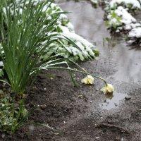 а они уже поверили в весну :: Наталья Паненко