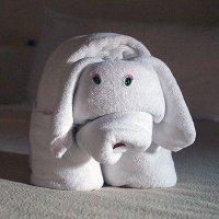 из полотенец горничная делает слоников :: Alex