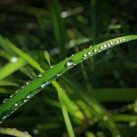 После дождя... :: Мисак Каладжян