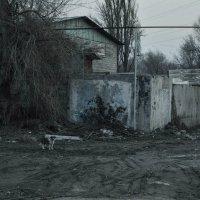 пёс :: Денис Иванов