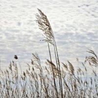 Весна на Лиепайском озере (6) :: Сергей Садовничий