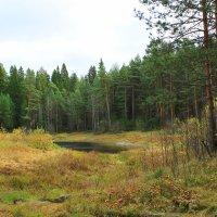 Озеро в лесу :: Александр Щеклеин