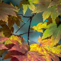 Осенний лес :: Юрий -