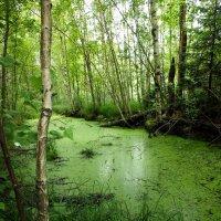 Подмосковные болотца в Снегирях :: Евгений Мергалиев