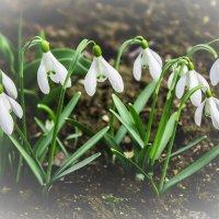 Я собираю запахи весны :: Анна Хотылева