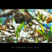 first flowers in forest :: Сергей Бабичев