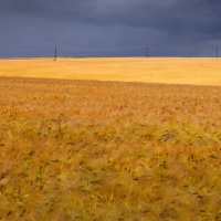Ячменное поле :: Валерий Талашов