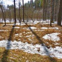 Последний снег :: Александр Садовский
