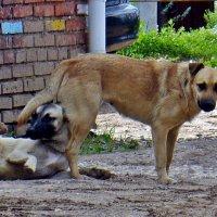 Собачьи  радости :: Валерий Викторович РОГАНОВ-АРЫССКИЙ