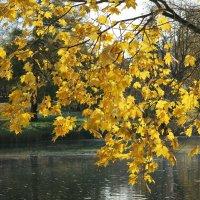 осень в парке :: Наталья