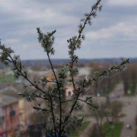 Город через призму весны.... :: Aleksandr Kondratenko