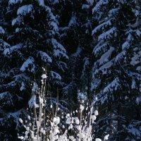 В зимнем наряде :: Валерий Талашов
