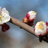 Весна пришла!!!!! :: Оксана Мельниченко