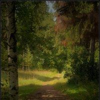 Тропинка в осень... :: Владимир Комышев