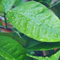 После дождя :: Dasha Darsi
