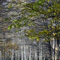 Идем искать осень ... :: Ольга Винницкая