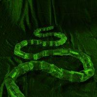 Зеленый змий №3 :: Евгений Юрков