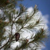 пробуждение весны :: liudmila drake