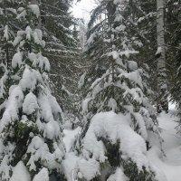 зимой в лесу :: Евгений Пикаревский