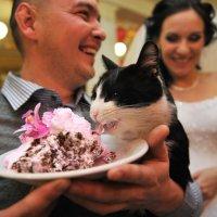 Котэ пожирающий свадебный торт :: Михаил Решетников