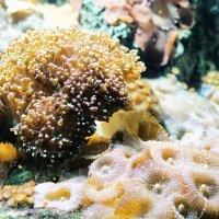 под водой :: navalon M