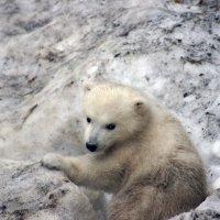 Медвежонок УМКА :: Яна Михалёва