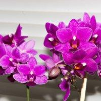 Орхидея :: Михаил Афанасьев