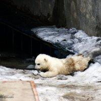 Медвежонок Умка) :: Яна Михалёва