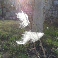 перья на ветру :: Юлия Закопайло