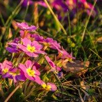 цветочки :: Юлия Гудзь