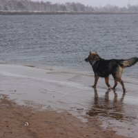 Пёс :: Арсений Тёмный