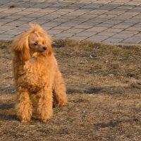 Собака :: Сергей Черепанов