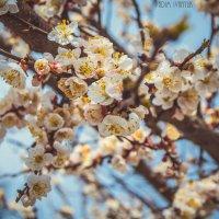Весна :: Вадим Иванюк