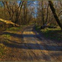 Весенний лес на закате дня :: Denis Aksenov