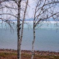 Озеро Белё весной :: Галина