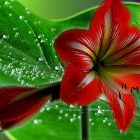 Цветок :: Валерий Лазарев