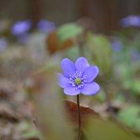 цветок :: Ольга Аникиева