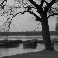Черное дерево :: Фотогруппа Весна.