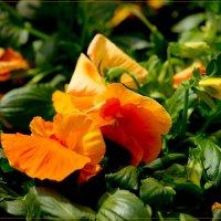 Весенний цветок :: Яков Геллер