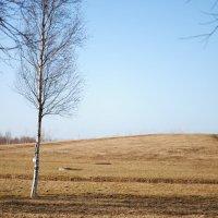 Весенний пейзаж :: Любовь Лунёва