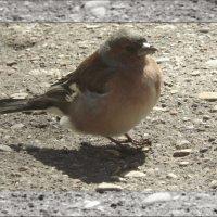 Птичка-невеличка :: Мария Климова