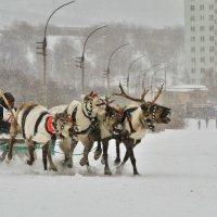 маршрутка :: Николай Бабий