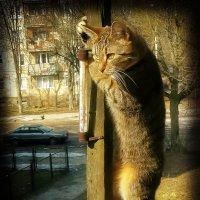 Где же ты друг,  любезный мой!?! :: Елена Kазак