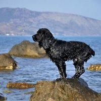 ...портрет собаки... :: Ольга Нарышкова
