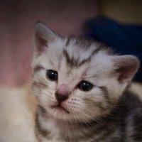 когда я вырасту - стану злобным котом, а пока у меня плохо получается... :: елена брюханова