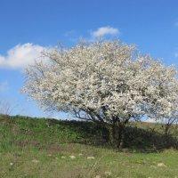 Весна :: Яна Чепик