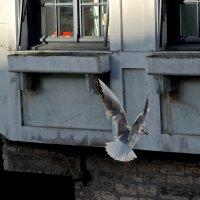 Птица в городской среде :: MVMarina