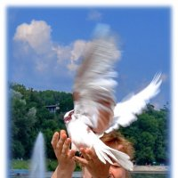 Лена и голубь) :: Валерий Стогов