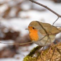 Встреча с птицей зари :: Ксения Соварцева