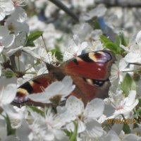 Бабочка1 :: Наталия Зверева